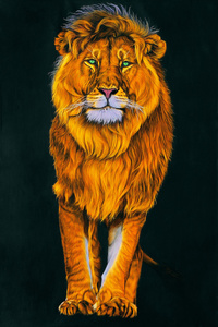Lion in Orange