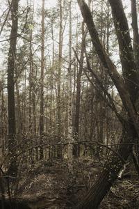Wald Apparat Braun I