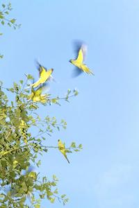 Tokyo Parrots 009