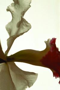 Untitled Flower VI