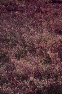 唐陵深草01 / Tang Mausoleum, Long grass 01