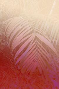 'Pink Palm'