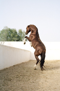 """""""#36 Untitled, 2011"""" (Anthar) from """"HORSE"""""""