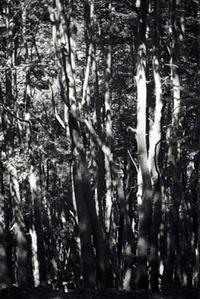 Wald (Tierra del Fuego) II