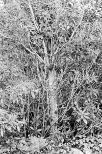 Untitled (Tree Collection)