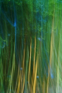 VEINS OF WATER AND GOLDEN BAMBOO