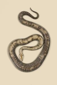 Snake 1 Ed.1/10