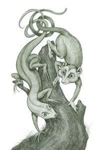 Symbiosis 1