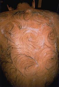 Van Gogh's Back