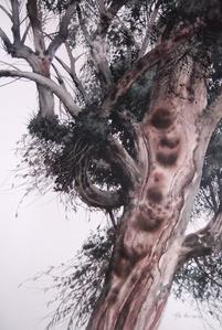 洋草果树; Tree
