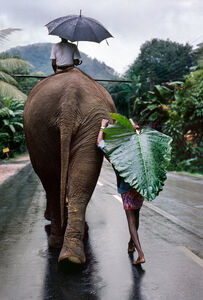 A young farmer walks next to an elephant, Kandy, Sri Lanka