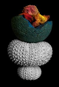 Urchins, Ball and Rose Petals