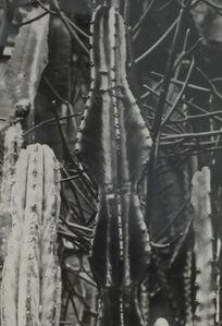 Die Welt der Pflanze Euphorbia