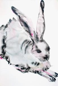 Rabbit, Medium