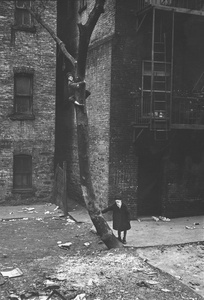 Untitled (Masks in Tree), New York City, New York