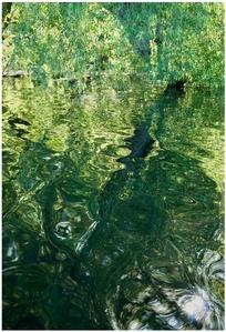 Liquid Landscape, Louisiana