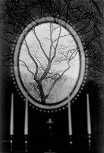 Tree in Mirror, New York (USA)