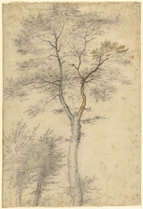 Three Studies of Trees