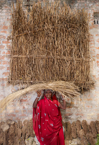 Red-Basanti, India