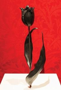 Black Tulip after Judith Leyster