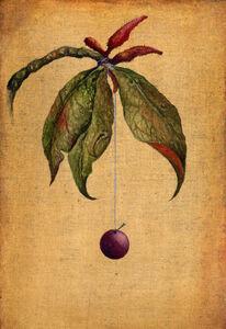 Hanging Cherry