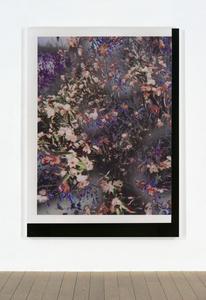 Untitled (Feb_24_2015_Floral_LuluBook _Scan 3)