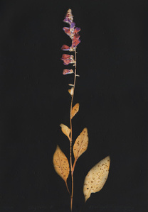 Digitalis II