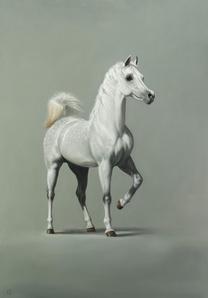 3. Arabian Stallion