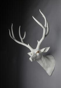Mule Deer - Right