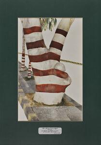 Trees of Pakistan - The Striped Eucalypt, Safeda