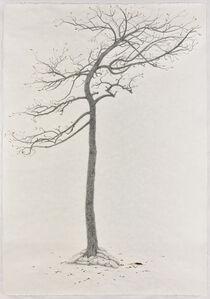 The Sacrifice Tree – Sequel