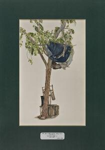Trees of Pakistan - The Main Mkt. Barber Shop Tree, Maulsary