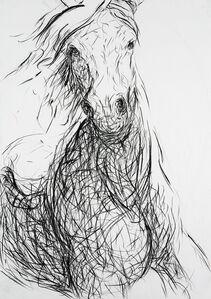 Glimpse at a Gallop