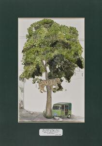 Trees of Pakistan - The Political Tiger Tree, Devils Tree, Blackboard Tree