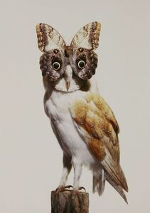 Owl With Butterfly