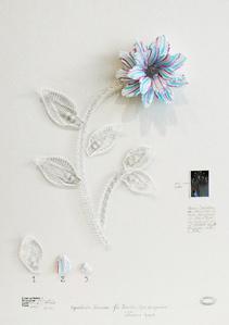 Herbário de plantas artificiales - Expedición Venezia - Flor Tricolor