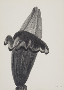 Květ / The Flower
