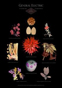 HFT The Gardener/Botanical Prints - Rank 8: General Electric - US - General industrials