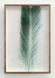 Botanical Frottage - Manuela (Oaxaca series)