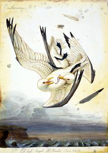 Ornithomancy No. 4