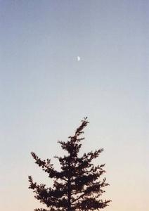Daymoon & Evergreen