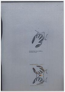 'BOUGÉ silver #1' -série 'Paleolithic hand. About 15,000 B.C., Pech-Merle, France