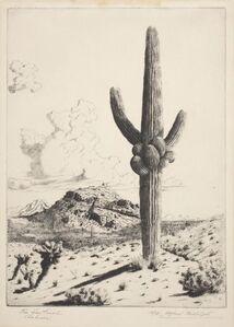 The Sentinel (Sahuaro)