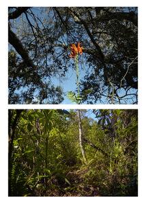 Untitled (Cape Honeysuckle on Hardee) & Untitled (Bill Sadowski Preserve)