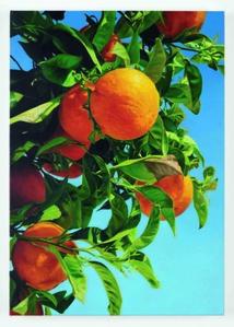 Orange 5 (Cyprus 08)