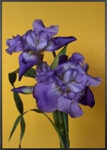 Big Flower (2)