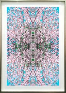 Cherry Blossom Series II