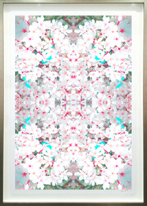 Cherry Blossom Series VI