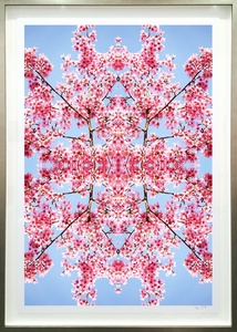 Cherry Blossom Series IV