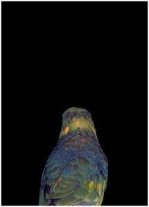 Bad Bird #27